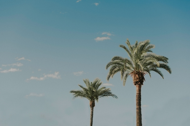Palm trees in Downtown Tucson, Arizona photographed by Sue Ellen Aguirre
